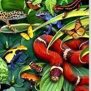 Lafayette 3D Colour View puzzles