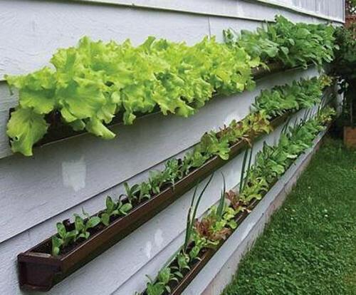 Clever idea: gutter veggie garden