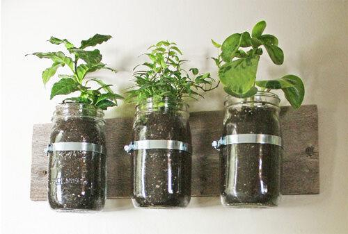 Wall mounted garden in a jar