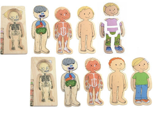 Wooden layer puzzle teaches kids about their bodies