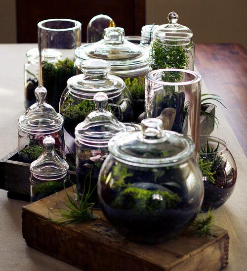 Glass jar terrariums