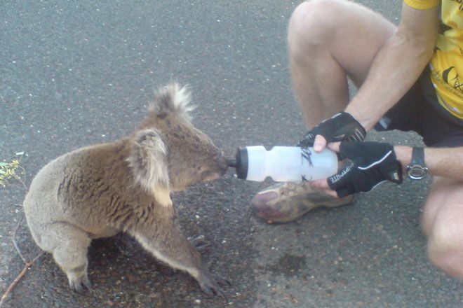 thirsty-koala-