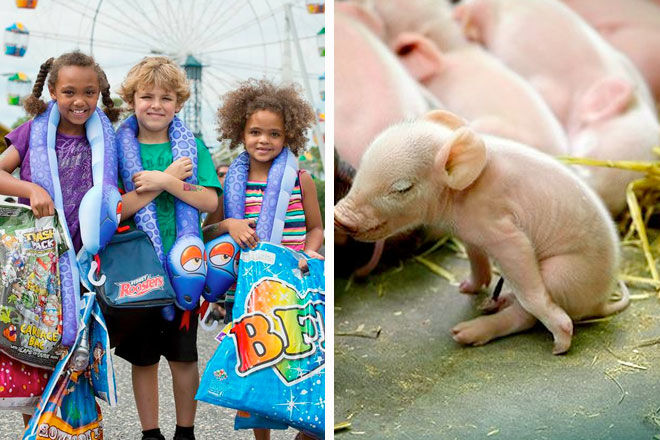 Win Tickets To The Sydney Royal Easter Show