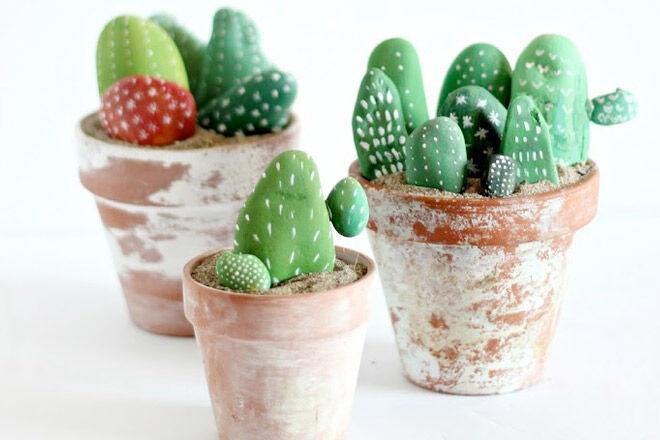 Cacti Rocks