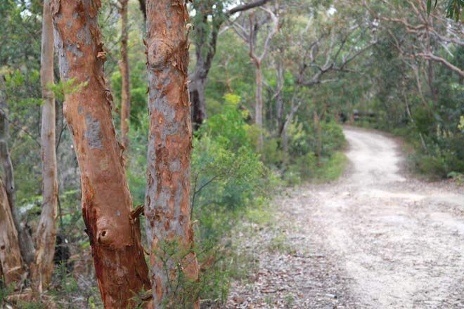 Bungoona-Walking-Track in NSW is suitable for taking a pram or wheelchair