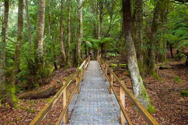 Penance-Grove-Walking-Track