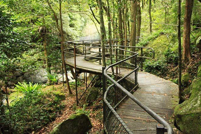 Rainforest-Look-Walk