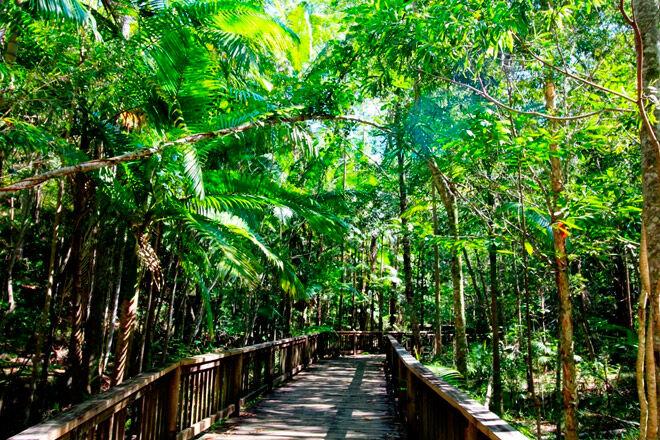 Queensland bush walk pram