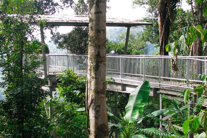 Queensland bush walk pram rainforest