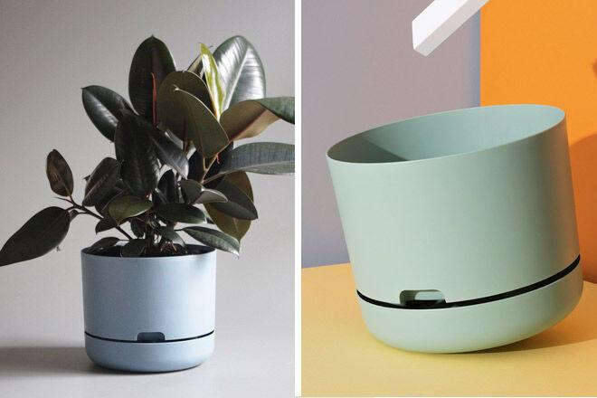 Mr-Kitly-Decor-planter