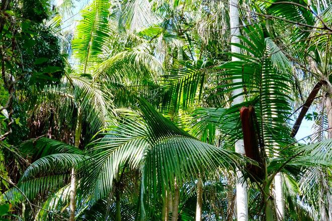 Queensland bush walk