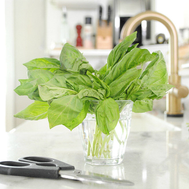 How to keep your basil fresher for longer.