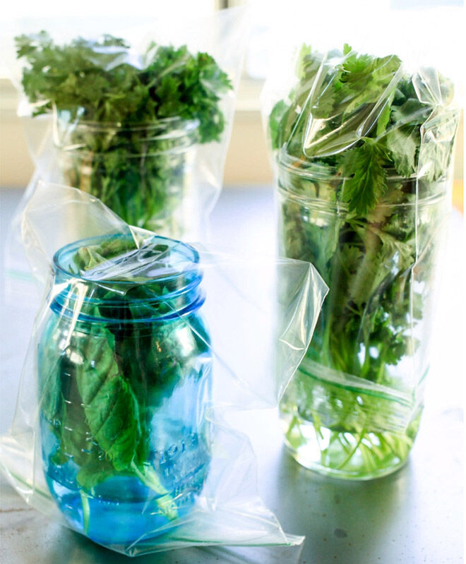 How to keep parsley, basil and coriander fresher for longer.