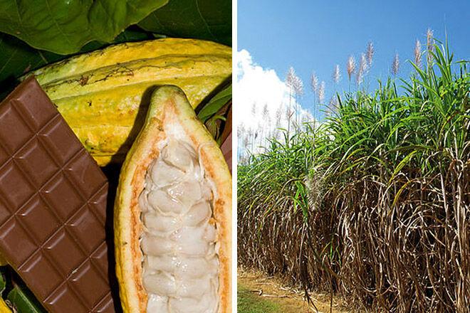 Queensland sugar chocolate kids farm