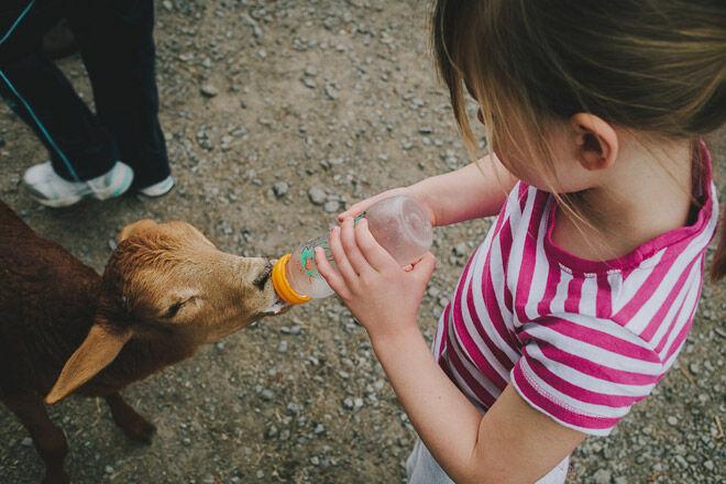Queensland kids farm animals