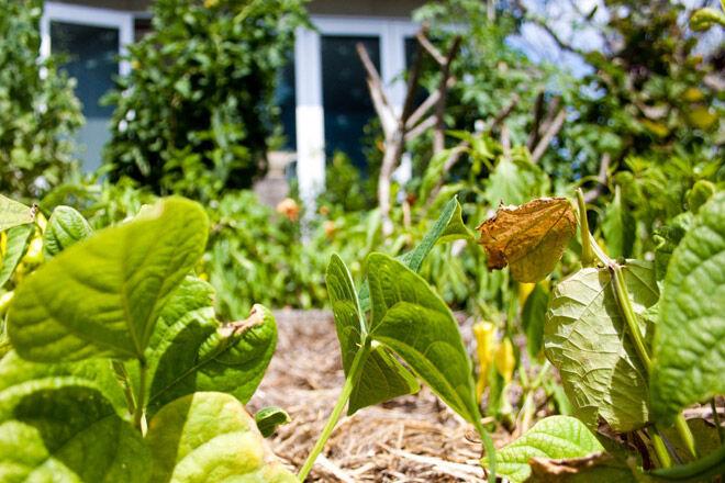 kid vegetable garden home