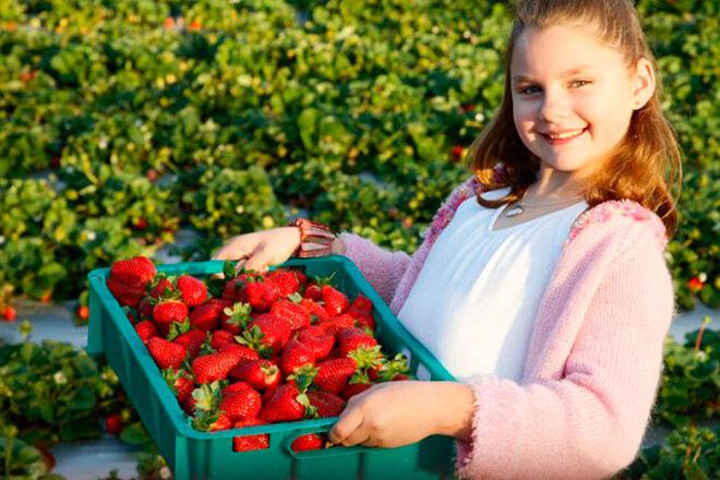 Queensland kids fruit farm