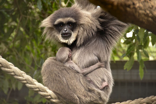 Mogo Zoo -Zoos and Sanctuaries to visit in NSW.