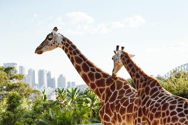 Taronga Zoo - zoos & sanctuaries in NSW