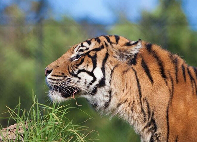 Symbio Zoo -Zoos and Sanctuaries to visit in NSW.