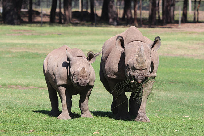 Western Plains Zoo -Zoos and Sanctuaries to visit in NSW.