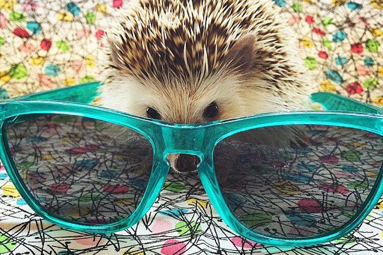 Instagram cute animal