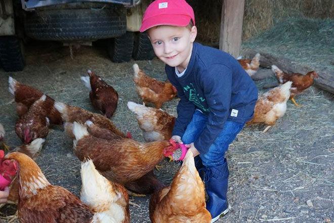 Lillydale farm visit kids