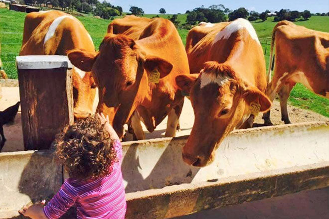 Farm to fridge learning about food
