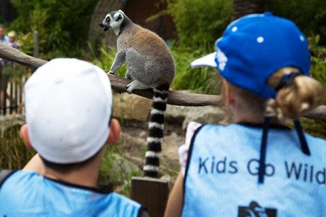 Melbourne-zoo-kids-go-wild