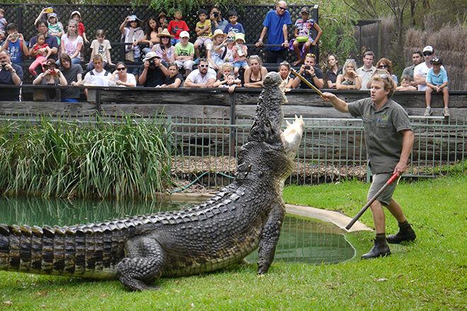 Australian Reptile Park -Zoos and Sanctuaries in NSW
