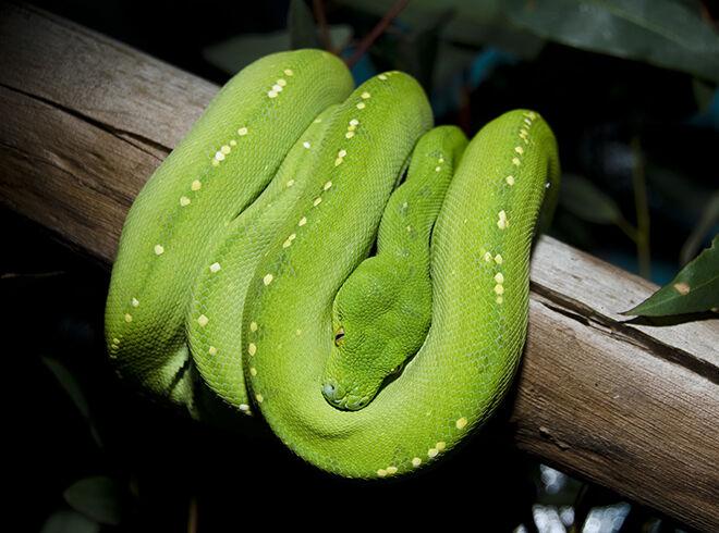 Wildlife Sydney Zoo - Zoos and Sanctuaries in NSW