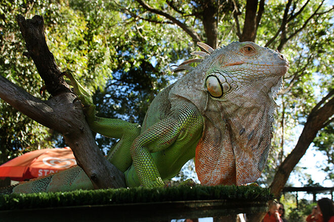 Shoalhaven Zoo -Zoos and Sanctuaries in NSW