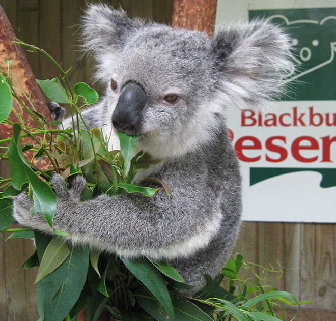 Blackbutt Reserve -Zoos and Sanctuaries in NSW