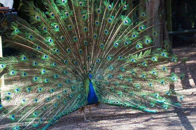 Birdland Animal Park -Zoos and Sanctuaries in NSW