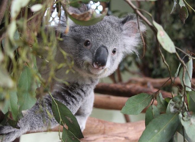 Featherdale Wildlife Park -Zoos and Sanctuaries in NSW
