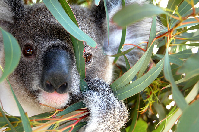 Australia Walkabout Wildlife Park -Zoos and Sanctuaries in NSW