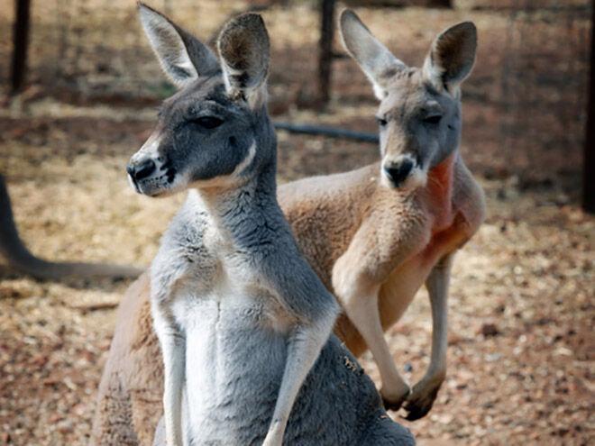 Waterways Wildlife Park -Zoos and Sanctuaries in NSW