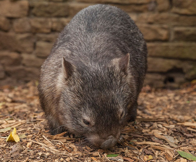 Koala Park -Zoos and Sanctuaries in NSW
