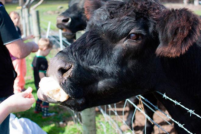 farm children victoria melbourne Animal Land Children's Farm