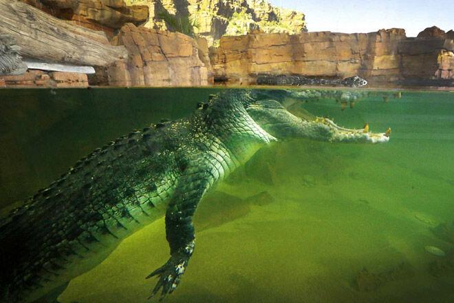 Ballarat Wildlife Park crocodile
