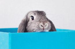 Bunny Instagram stars
