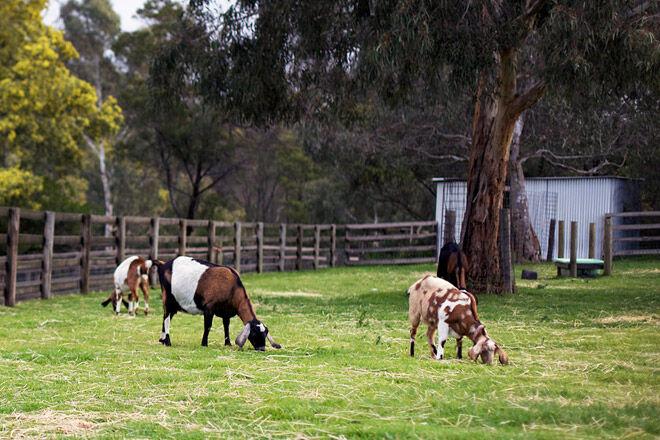 animal farm kid victoria melbourne collingwood childrens farm