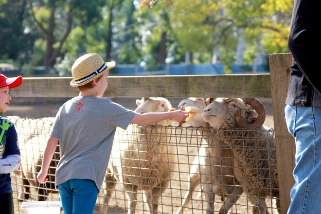 kids farm animals children