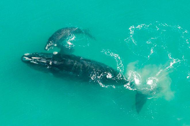 whales watching kid victoria humpback Logan's Beach Whale Viewing Platform