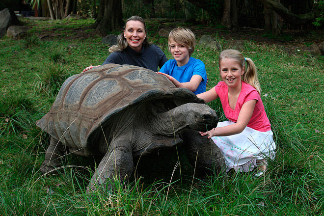 animal kid encounter tortoise victoria melbourne zoo