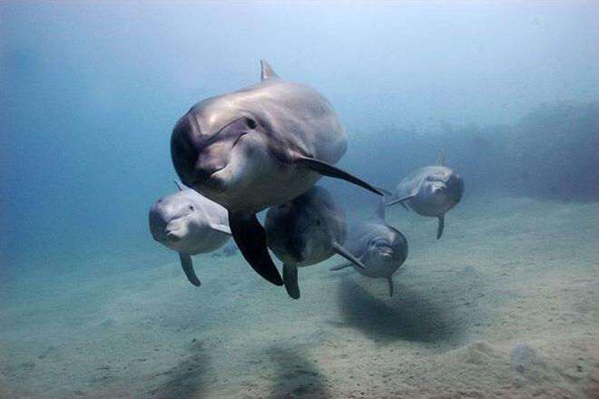 victoria kid dolphin sea underwater cruise animal Moonraker Dolphin Swims