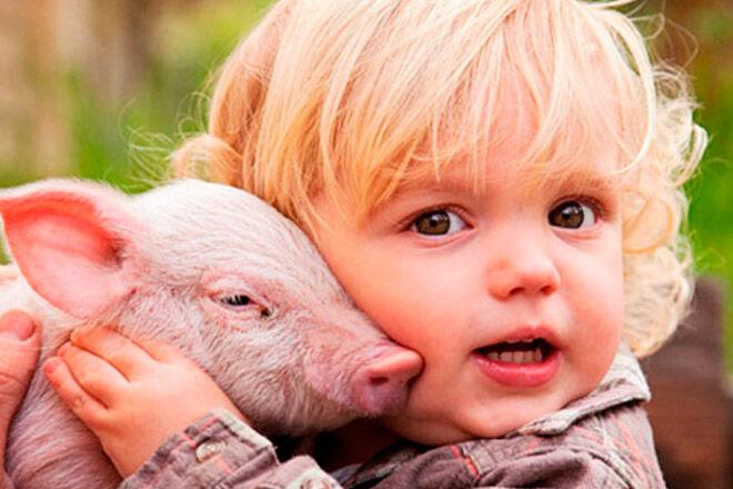Rain Hayne & Shine cuddling piglets