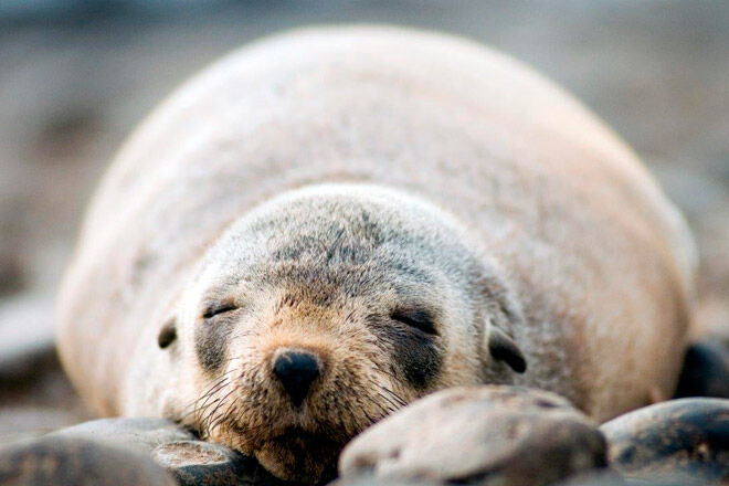 victoria phillip island kid seal cruise Wild Ocean EcoBoat Tour
