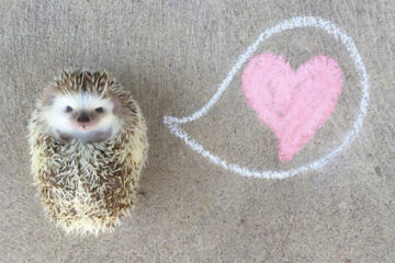 Huff the Hedgehog love