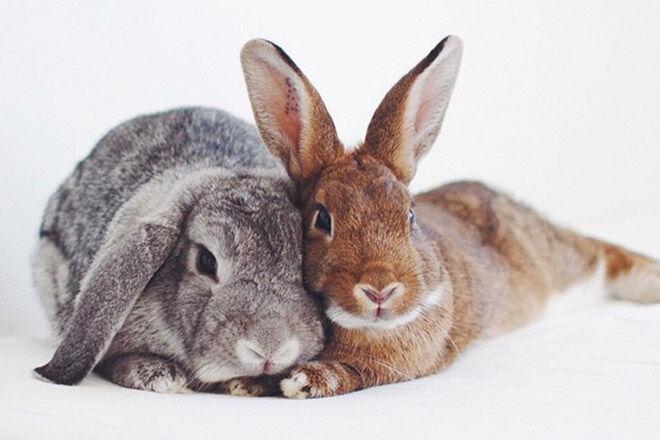 instagram rabbit bunny bunnies cute animal pet
